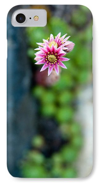 IPhone Case featuring the photograph Tiny Blossom by Erin Kohlenberg