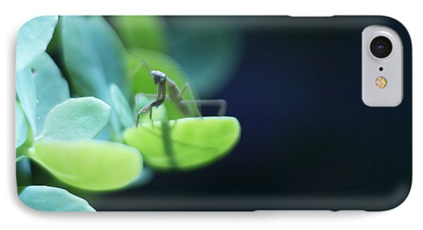 IPhone Case featuring the photograph Tiny Praying Mantis On Sedum by Rebecca Sherman