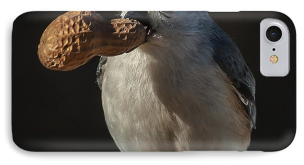 Titmouse And Peanut IPhone Case by Jim Moore