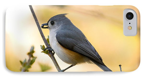 Titmouse iPhone 7 Case - Titmouse In Gold by Shane Holsclaw