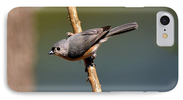 IPhone Case featuring the photograph Titmouse by Lisa L Silva