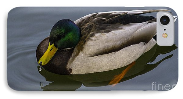 IPhone Case featuring the photograph Tivoli Duck by Michael Canning