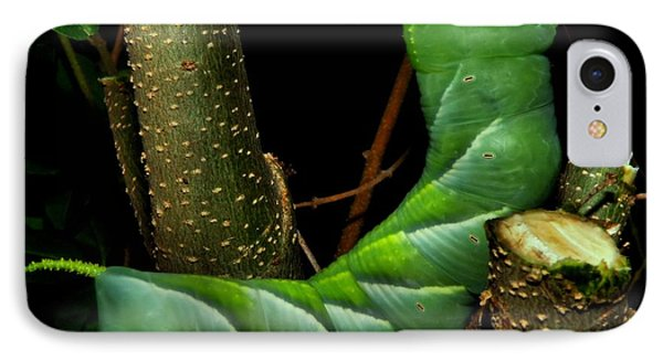 Tobacco Worm Phone Case by Christy Ricafrente