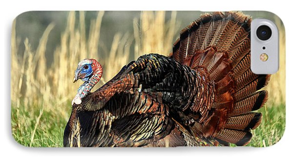 Tom Turkey Phone Case by Jaki Miller