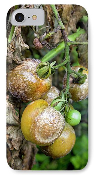 Tomatoes Infected With Late Blight IPhone Case by Dr Jeremy Burgess