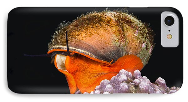 Top Snail IPhone Case