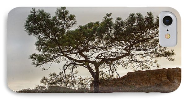 Torrey Pine Tree Phone Case by Darleen Stry