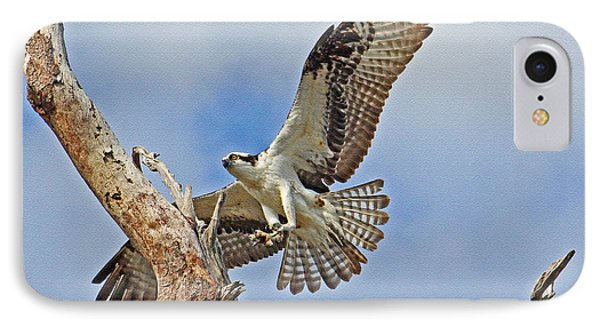 Touch Down - Osprey In Flight IPhone Case