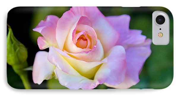 Rose-touch Me Softly IPhone Case by David Millenheft
