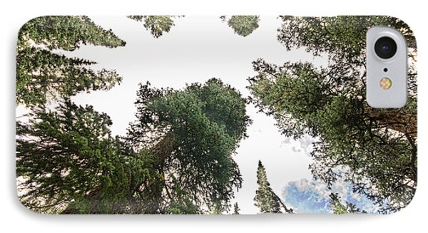 Towering Pine Trees Phone Case by James BO  Insogna
