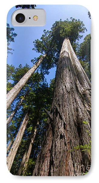 Towering Redwoods IPhone Case