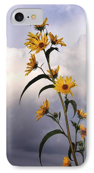 IPhone Case featuring the photograph Towering Sunflowers by Rob Graham
