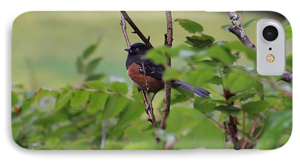 Towhee Keeps Watch On High Phone Case by Kym Backland