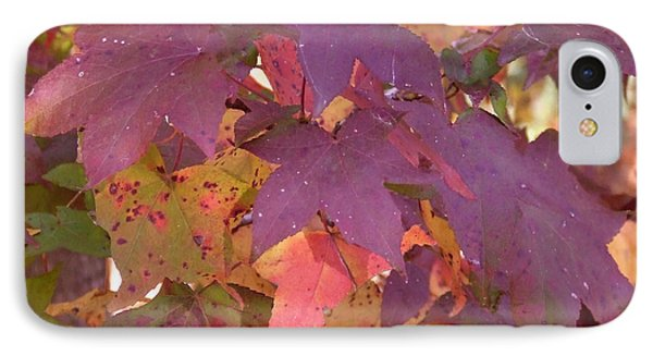 Traces Of Fall IPhone Case by Andrea Anderegg