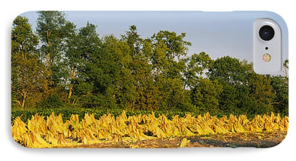 Tractor In A Tobacco Field, Winchester IPhone Case by Panoramic Images