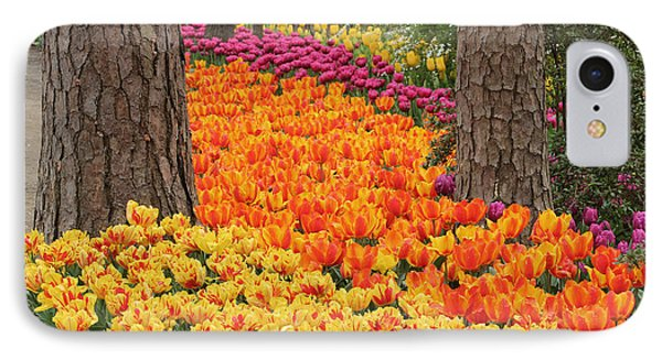Trail Of Tulips IPhone Case by Robert Camp