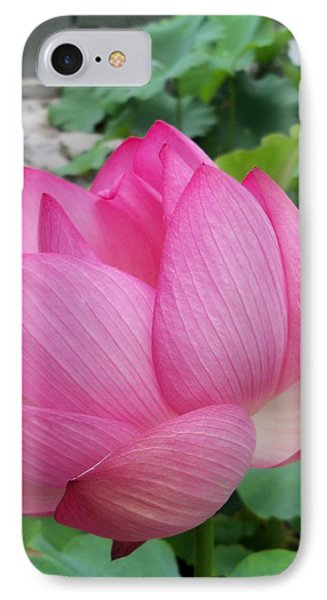 Tranquil Lotus  IPhone Case by Lingfai Leung