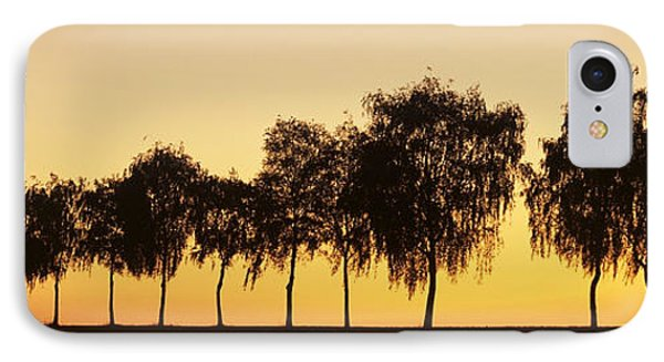 Tree Alley At Sunset, Hohenlohe IPhone Case by Panoramic Images