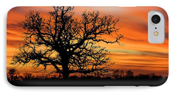Tree At Sunset IPhone Case by Elizabeth Budd