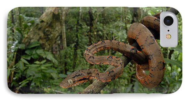 Tree Boa Phone Case by Francesco Tomasinelli