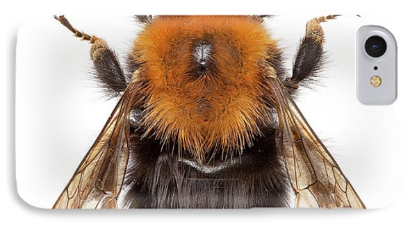 Tree Bumblebee IPhone Case by Natural History Museum, London