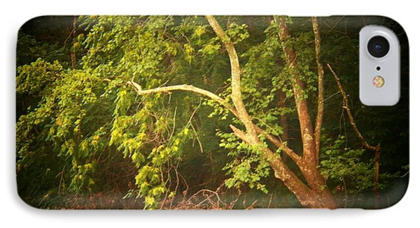 Tree By The Cacapon IPhone Case