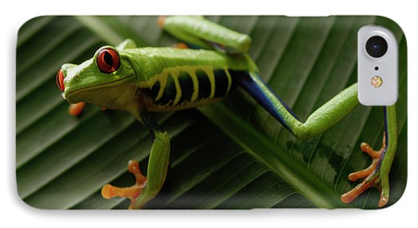 Tree Frog 16 IPhone Case