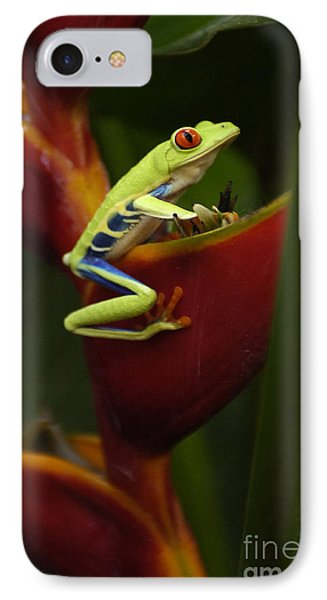 Tree Frog 3 Phone Case by Bob Christopher