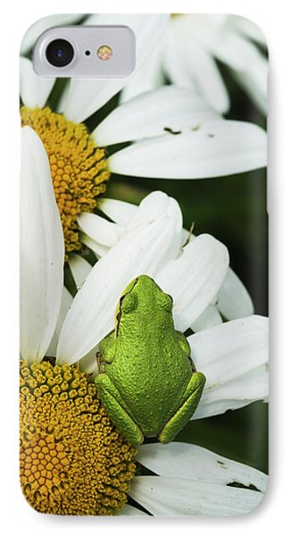 Tree Frog Rests On A Daisy  Astoria IPhone Case by Robert L. Potts