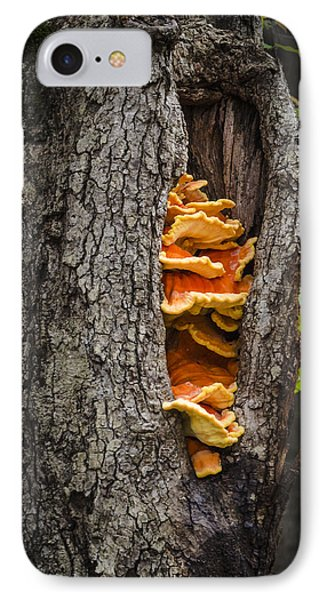 Tree Fungus Phone Case by Bradley Clay
