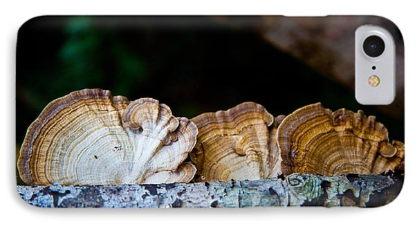 Tree Fungus IPhone Case by Carole Hinding