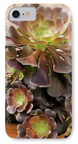 Tree Houseleek (aeonium Arboreum) IPhone Case by Adrian Thomas