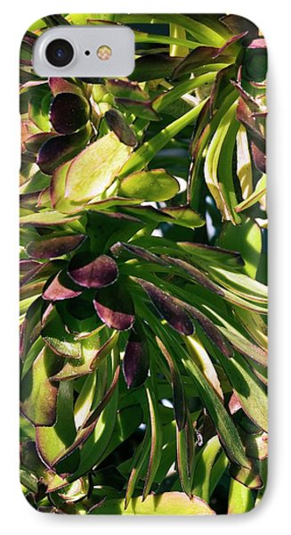 Tree Houseleek (aeonium Atropurpureum) IPhone Case by Adrian Thomas