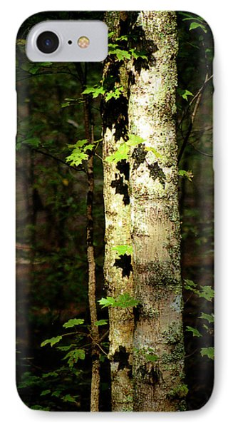Tree In The Woods IPhone Case by Pamela Critchlow