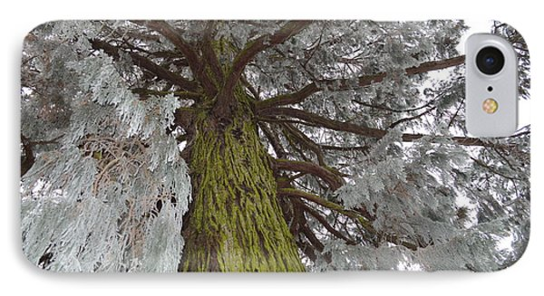 IPhone Case featuring the photograph Tree In Winter by Felicia Tica