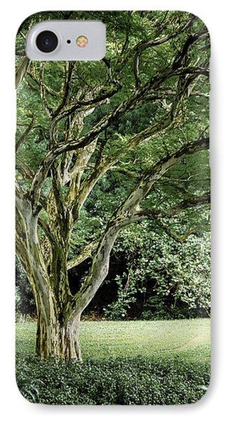 Tree Of Life IPhone Case by Debbie Karnes