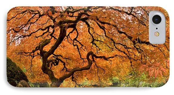 Tree Of Life IPhone Case by Lori Grimmett