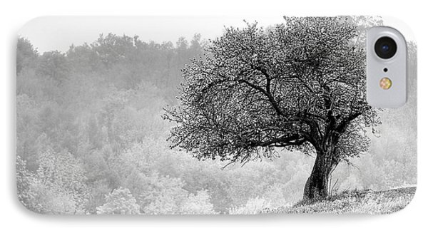 Tree On Marilla Hill IPhone Case by Don Nieman