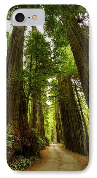 Tree Redwood Ca 3 Phone Case by John Brueske