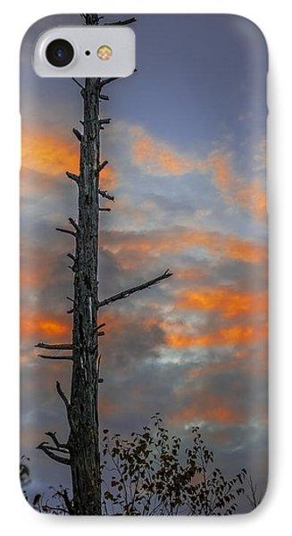 Tree Silhouette IPhone Case by Paul Freidlund