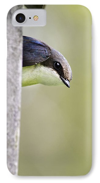 Tree Swallow Closeup IPhone Case by Christina Rollo