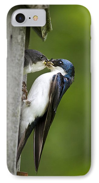 Tree Swallow Feeding Chick IPhone Case by Christina Rollo