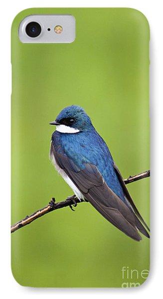 Tree Swallow II - D009009 IPhone Case by Daniel Dempster