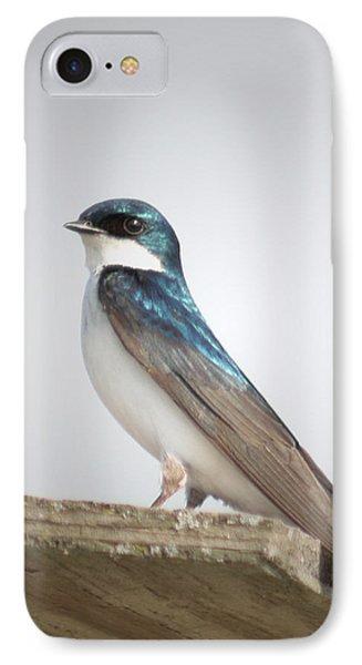 Tree Swallow Portrait Phone Case by Anita Oakley