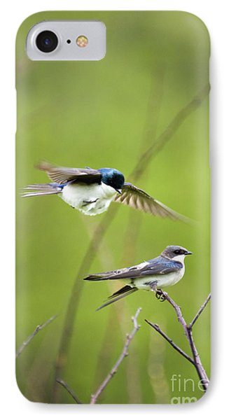 Tree Swallows - D008997 IPhone Case by Daniel Dempster