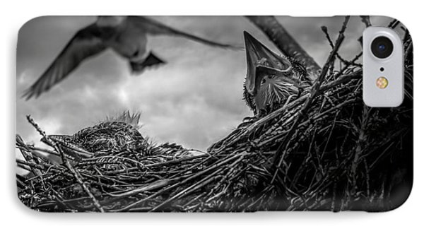 Tree Swallows In Nest IPhone Case by Bob Orsillo