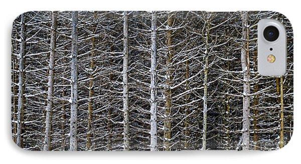 Tree Trunks In Winter IPhone Case by Elena Elisseeva
