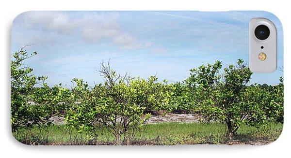Trees With Citrus Greening Disease IPhone Case