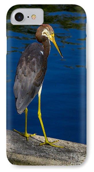 Tri-color Heron 1 IPhone Case