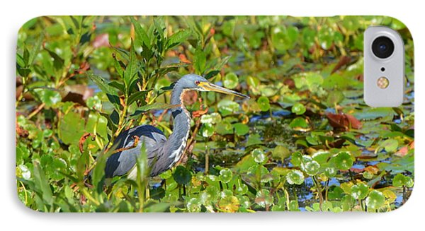 Tri Colored Heron 2 IPhone Case by Jodi Terracina